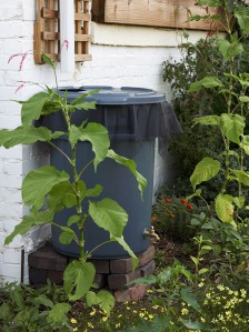Make a Rain Barrel to Save Water - BHG