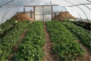 insidegreenhouse-compostpile