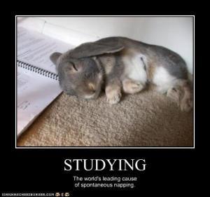 Study Nap