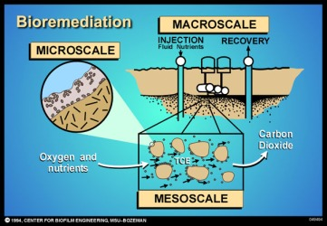 Image result for Bioremediation