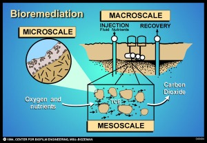 Bioremediation diagram